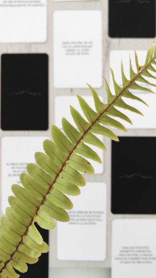 Foto cartas salvajes de Sierra Salvaje