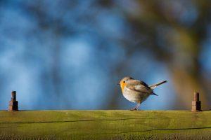 Foto pájaro para articulo sobre lanueva normalidad
